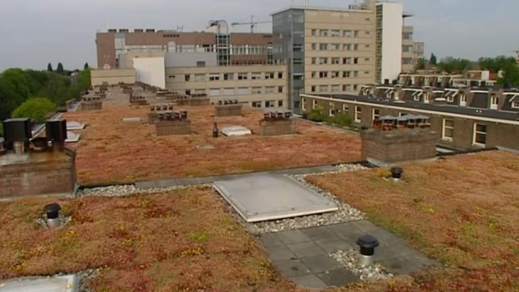 Eén hectare aan groen op daken in binnenstad