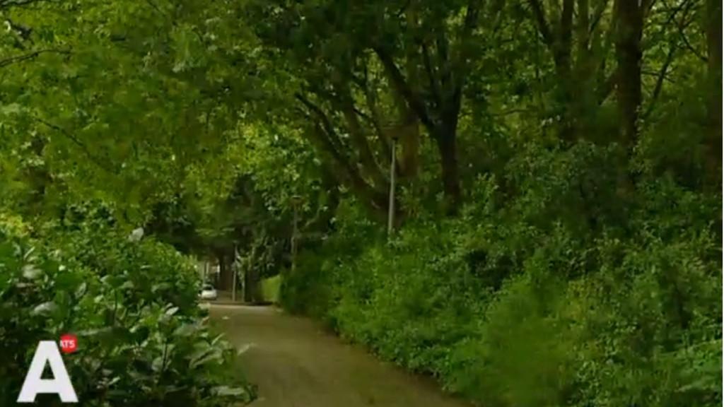 Vrienden Oosterpark boos om geplande kap 400 bomen