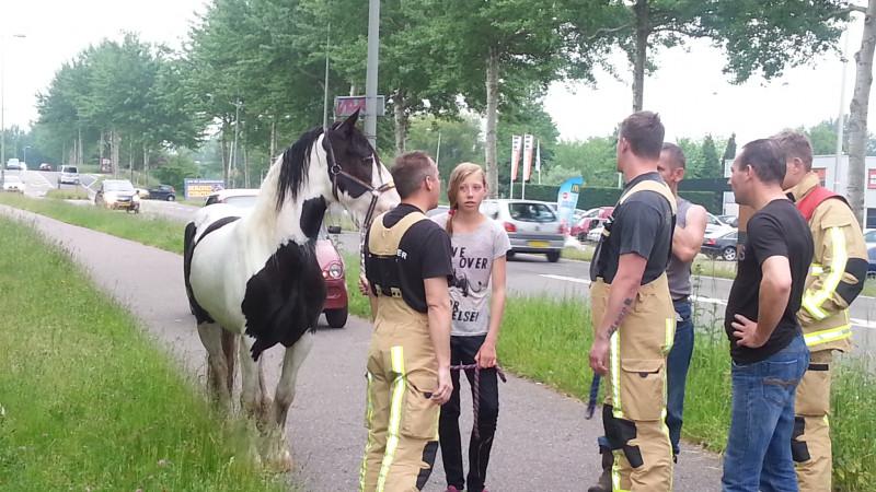 Paard trekt baantjes in Noord