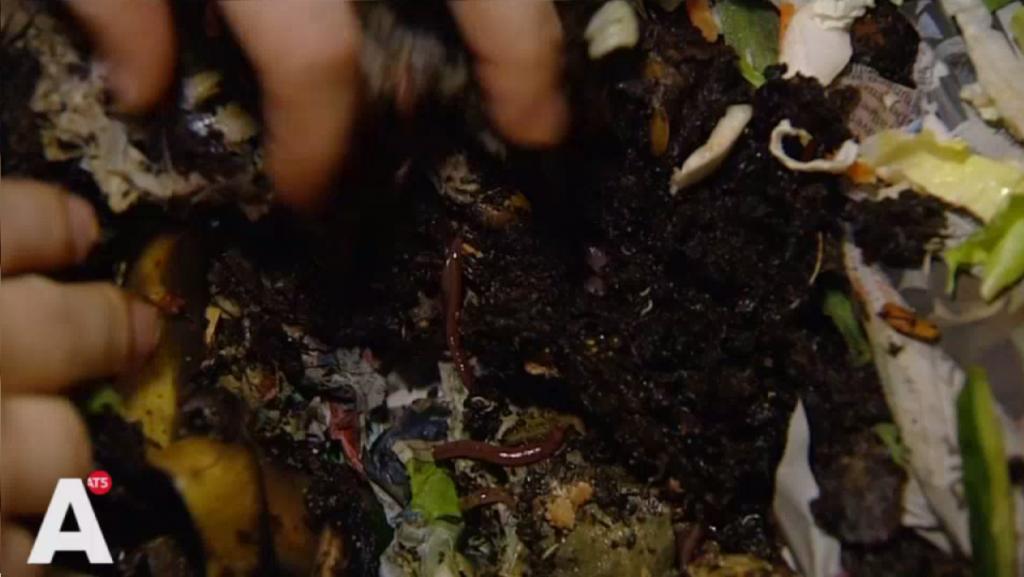 [VIDEO] Composterende wormen in de woonkamer