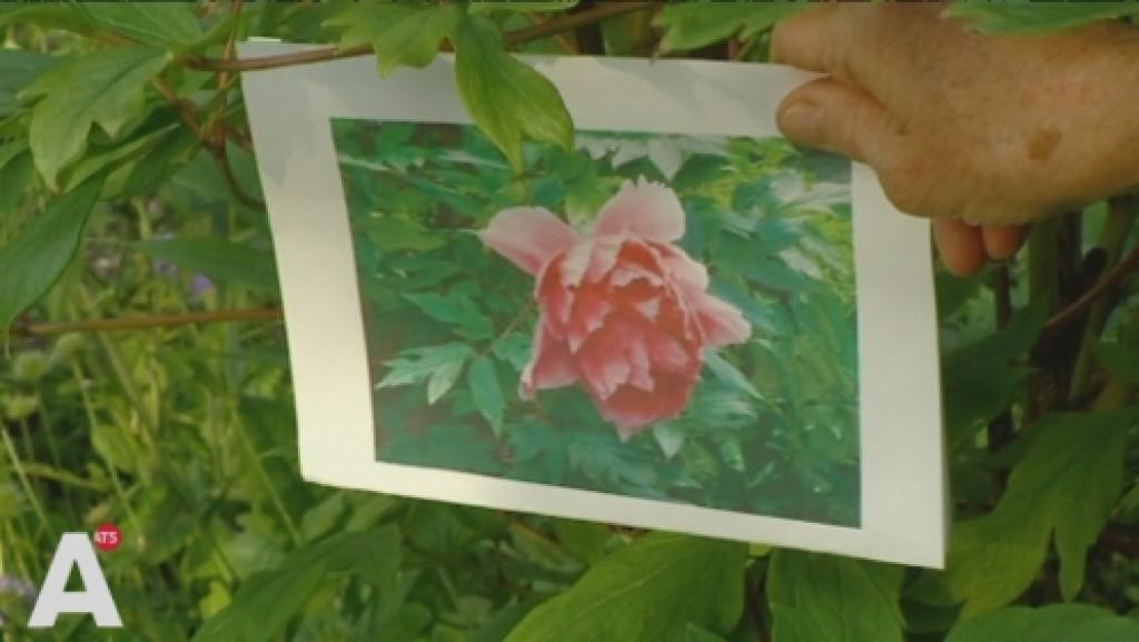 Vrijwilligers Beatrixpark verbijsterd over 'bloemenroof'