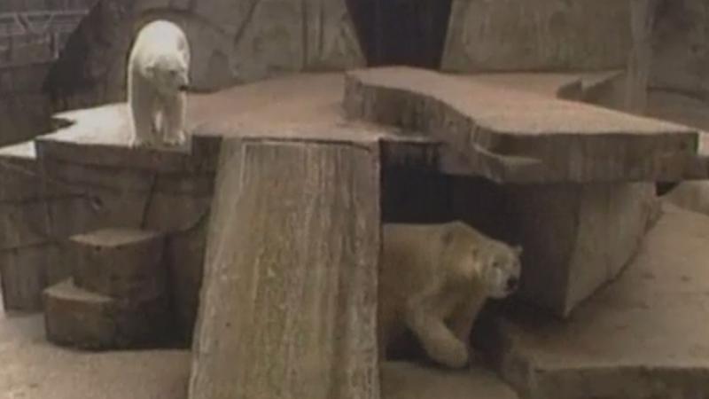 boris, katrien, ijsberen, ijsbeer, artis