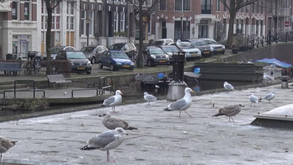 Amsterdam Informeert: Parkeervergunning voor bezoek