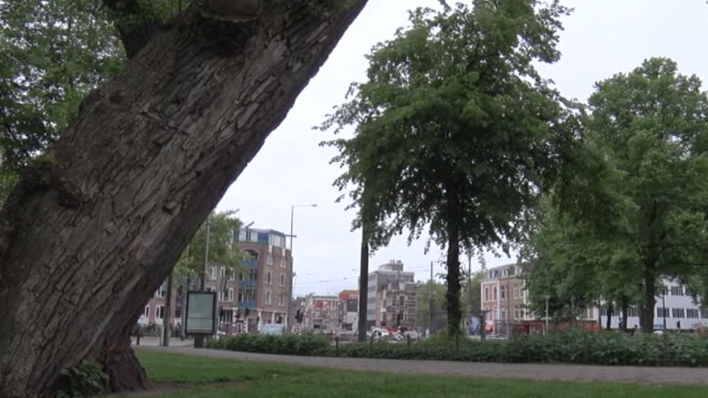 Amsterdam Informeert: Bomeninspectie
