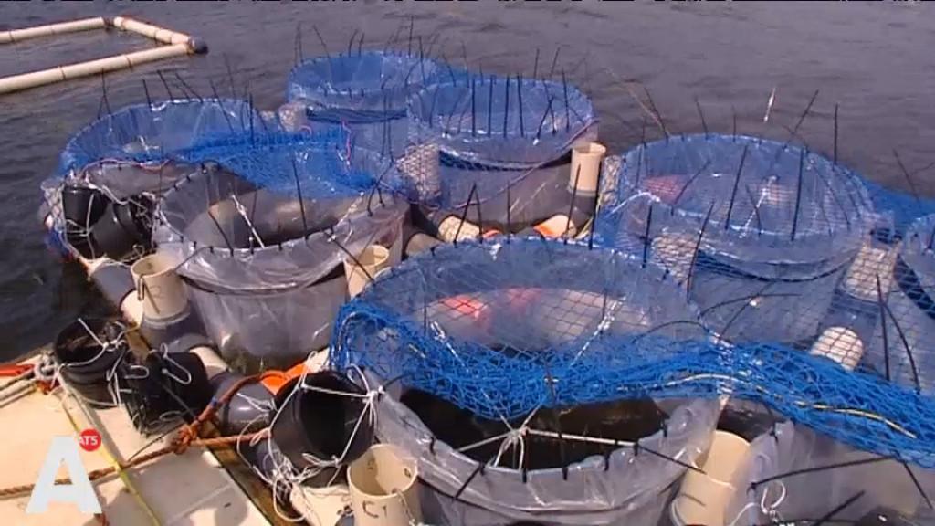 Waterkwaliteit Sloterplas beter dankzij mossel