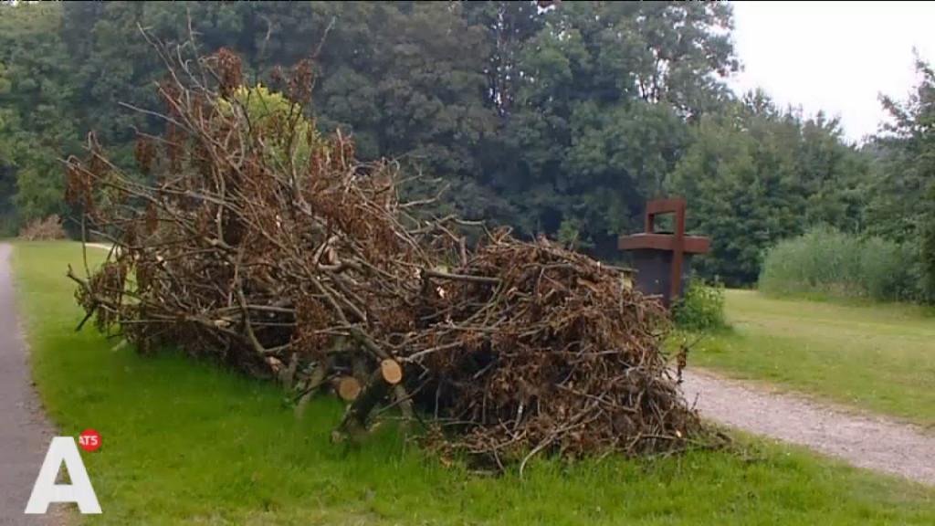 Es verdwijnt misschien uit Amsterdamse Bos door schimmel