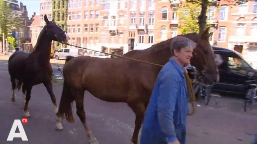 'Het gaat bij paarden allemaal om goede training'