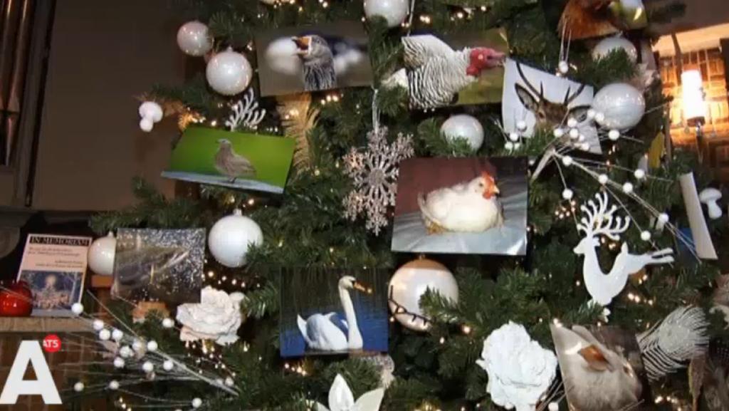Vredesmis voor dieren: 'Enorm veel dieren moeten lijden voor Kerst'