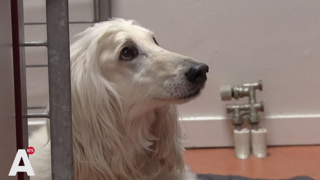 Honden van Dagmar in orde, 'nu nog een financieel wonder'
