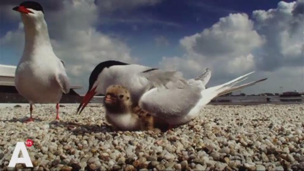Amsterdam Wildlife nog steeds iedere week uitverkocht: 'Overtreft onze stoutste dromen'