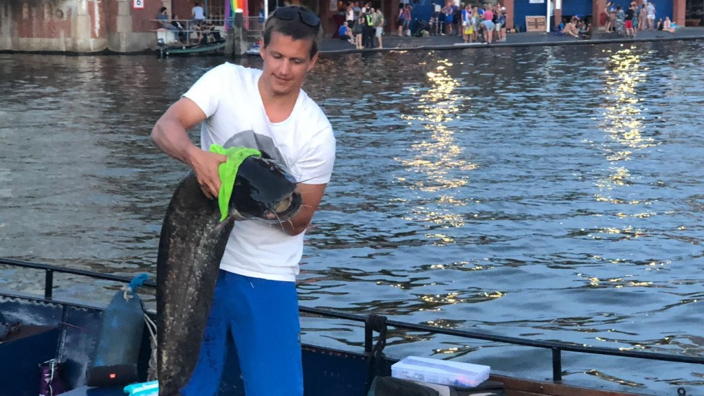 Martijn ving meerval in Amstel: Ik ga er niet meer zwemmen