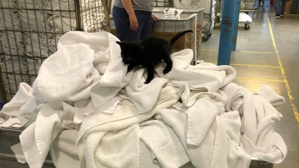 Medewerkers wasserette Westpoort vinden zwarte kitten tussen witte was