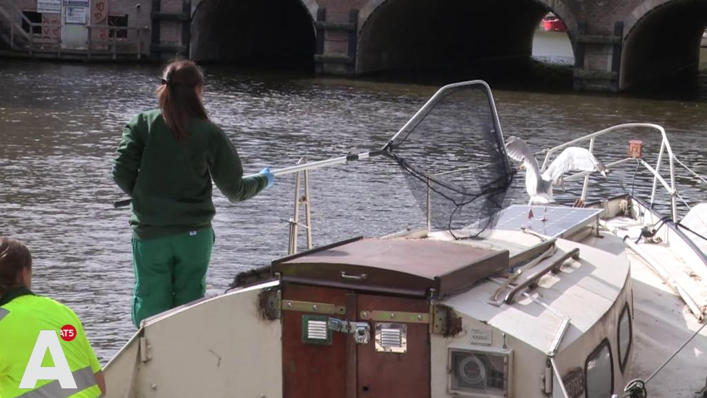 Dierenambulance te water tegen afval: 'Dieren raken verstrikt in plastic tasjes'