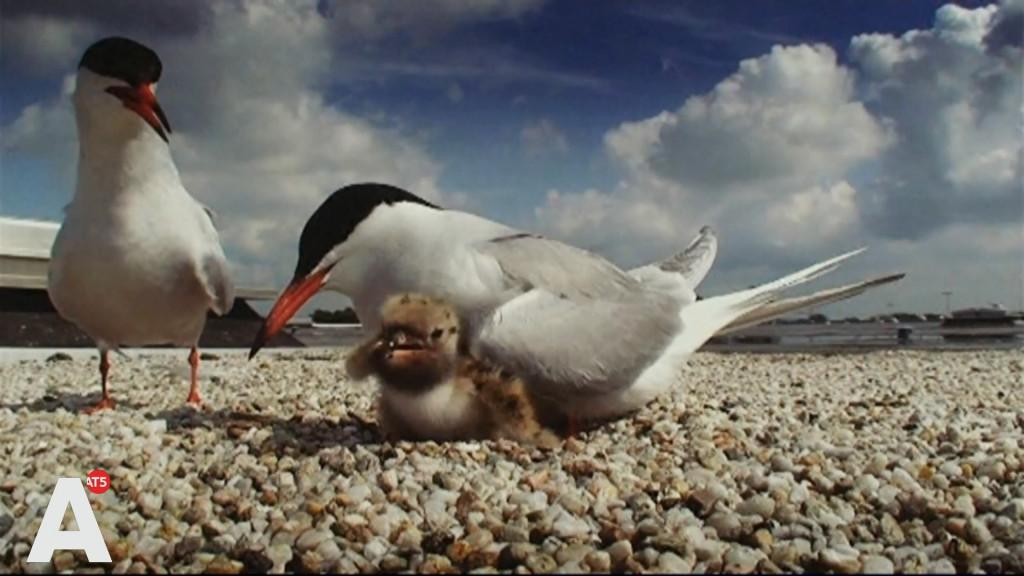 De laatste Amsterdam Wildlife: 'Dit succes hadden we nooit verwacht'