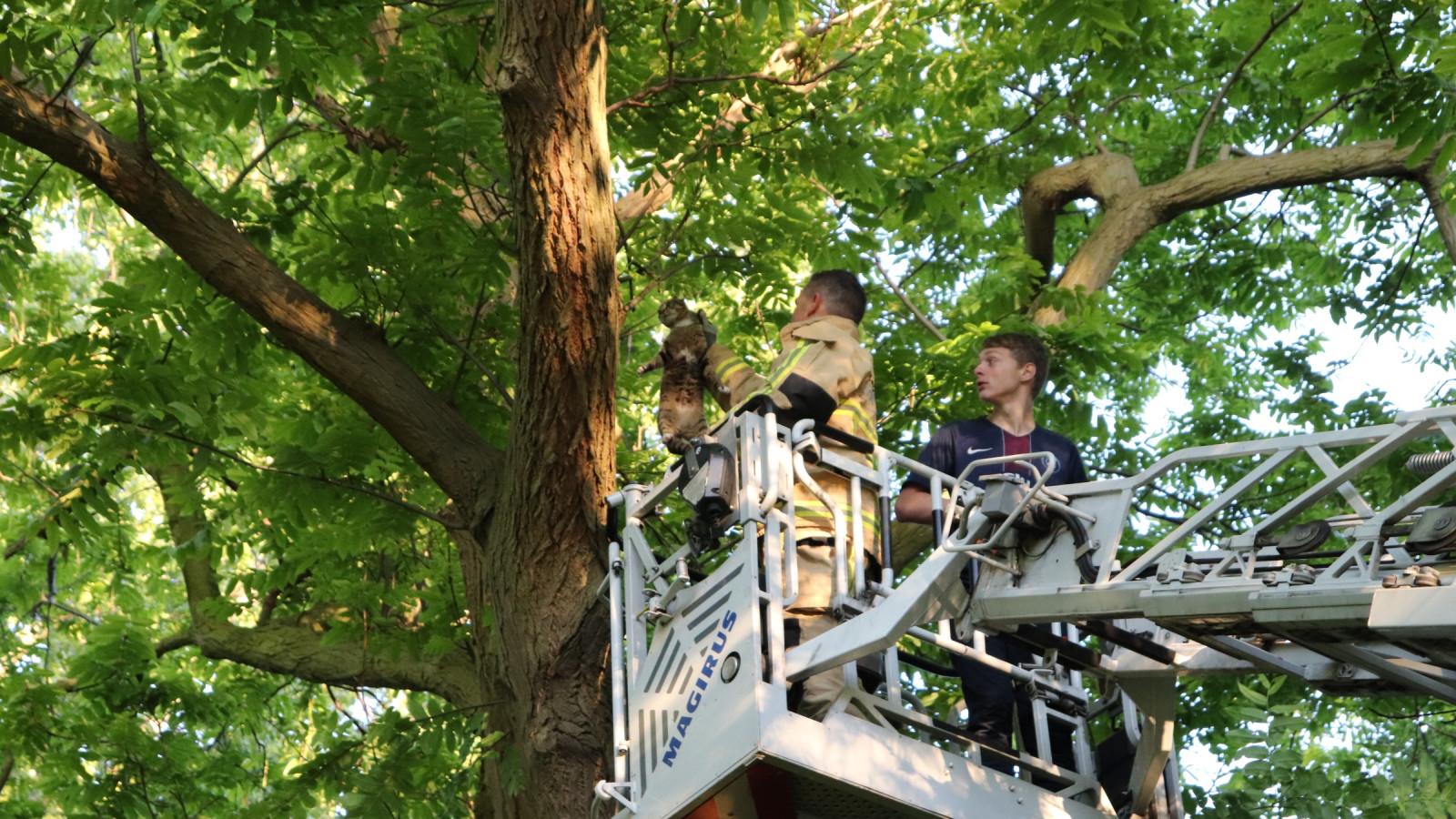 Brandweer redt kat en jongen uit boom in Noord