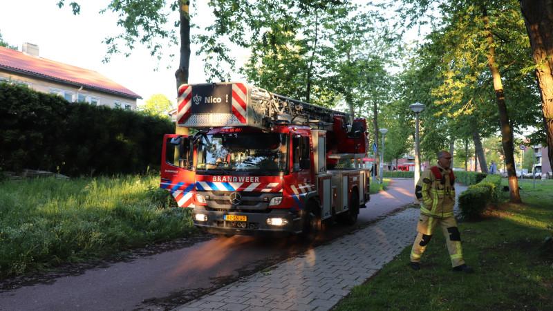 brandweer redt kat en jongen uit boom